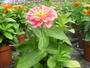 soc. agr. floricolalberto s.s.