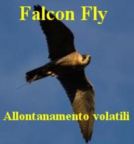 FALCON FLY - Allontanamento piccioni con falchi Parma