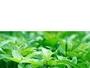 ORTICA polvere micronizzata agricoltura biologica