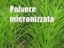 EQUISETO MICRONIZZATO per agricoltura biologica